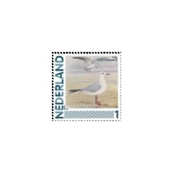 2011 Nederland persoonlijke postzegels   Vogels, Kokmeeuw