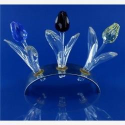 Set tulpen